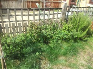 Wooden fence with a lot of green weeds and some grass in front of it