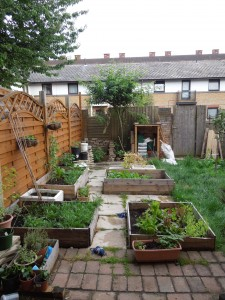 Several raised beds with paving slabs between them in most of picture, 6 foot fence to left, some grass to right, rose tree in background.