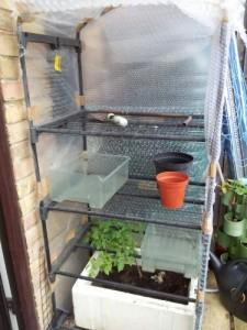Twisting Vines: Bubblewrap Mini Greenhouse